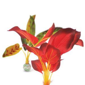 צמחים לעיצוב האקווריום biOrb